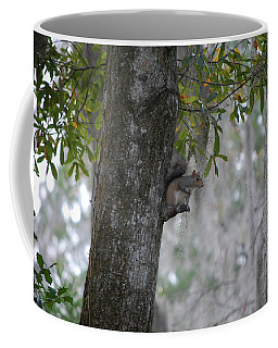 Squirrel In A Tree Coffee Mug