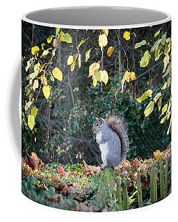 Squirrel Perched Coffee Mug