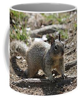 Squirrel Play  Coffee Mug