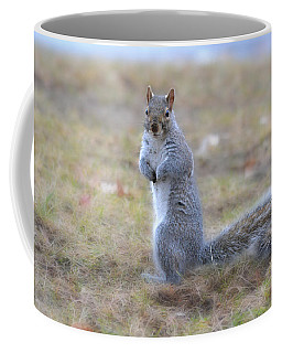 Coffee Mug featuring the photograph Squirrel With Dirt On Nose by Beth Sawickie