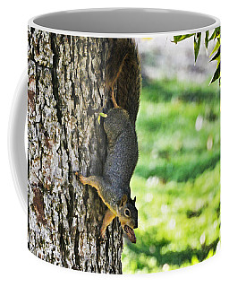 Squirrel With Pecan Coffee Mug