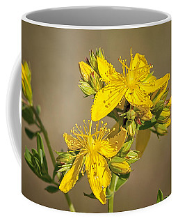 St Johns Wort Coffee Mug