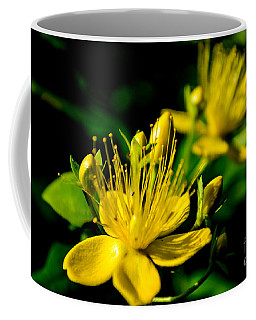 St John's Wort Coffee Mug