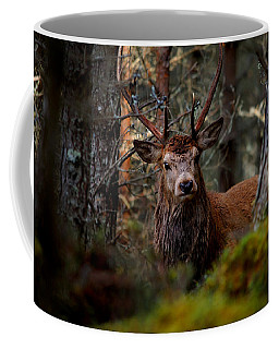 Stag In The Woods Coffee Mug