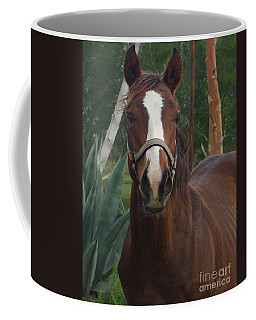 Coffee Mug featuring the photograph Stared Down by Peter Piatt