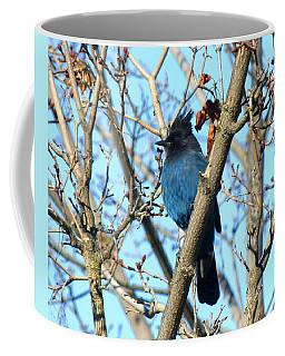 Steller's Jay In Winter Coffee Mug