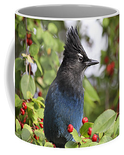 Steller's Jay And Red Berries Coffee Mug by Teresa Zieba
