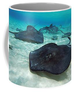Stingrays Coffee Mug