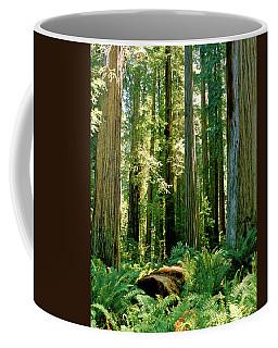 Stout Grove Coastal Redwoods Coffee Mug