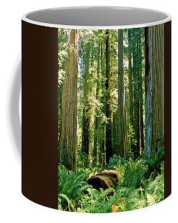 Stout Grove Coastal Redwoods Coffee Mug by Ed  Riche