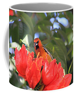 Streak-backed Oriole Coffee Mug