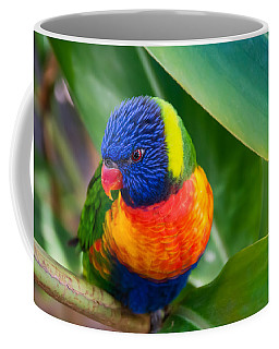 Striking Rainbow Lorakeet Coffee Mug