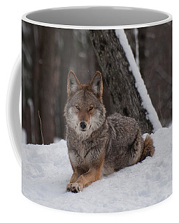 Coffee Mug featuring the photograph Striking The Pose by Bianca Nadeau