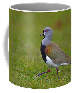 Strutting Lapwing Coffee Mug