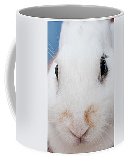 sugar the easter bunny 1 -A curious and cute white rabbit close up Coffee Mug