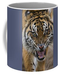 Sumatran Tiger Male Snarling Native Coffee Mug