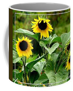 Coffee Mug featuring the photograph Sunflowers by Rose Santuci-Sofranko