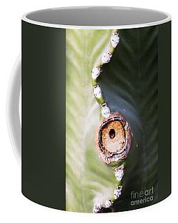Sunlight Split On Cactus Knot Coffee Mug