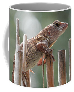 Coffee Mug featuring the photograph Sunning Lizard by Belinda Lee