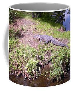 Sunny Gator  Coffee Mug by Joseph Baril