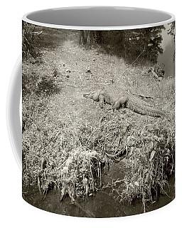 Coffee Mug featuring the photograph Sunny Gator Sepia  by Joseph Baril