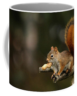 Surprised Red Squirrel With Nut Portrait Coffee Mug
