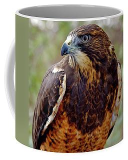 Swainson's Hawk Coffee Mug by Ed  Riche