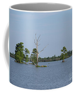 Coffee Mug featuring the photograph Swamp Cypress Trees by Joseph Baril