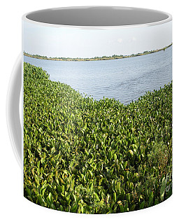 Coffee Mug featuring the photograph Swamp Hyacinths Water Lillies by Joseph Baril