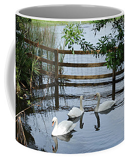 Swans In The Pond Coffee Mug
