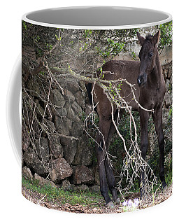 sweet heart - A tender foal wait his beloved mother  Coffee Mug by Pedro Cardona