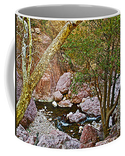 Sycamore And Cottonwood In Whitewater Catwalk National Recreation Trail Near Glenwood-new Mexico  Coffee Mug