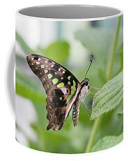 Tailed Jay Butterfly #3 Coffee Mug