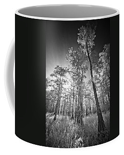 Tall Cypress Trees Coffee Mug by Bradley R Youngberg