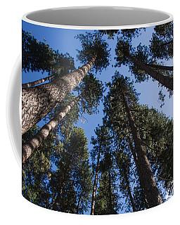 Talls Trees Yosemite National Park Coffee Mug