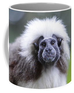 Coffee Mug featuring the photograph Tamarins Face by Shoal Hollingsworth