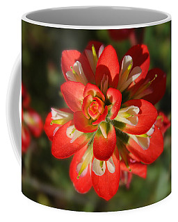 Texas Paintbrush Coffee Mug