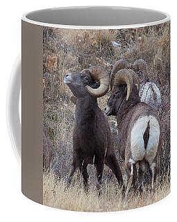 Coffee Mug featuring the photograph The Boys Club by Jim Garrison