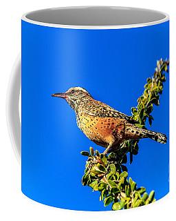 The Cactus Wren Coffee Mug
