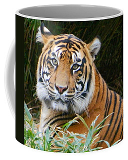The Eyes Of A Sumatran Tiger Coffee Mug