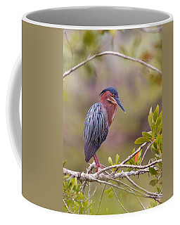The Green Heron At Blue Hole Coffee Mug