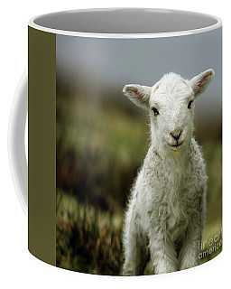 Spring Photographs Coffee Mugs