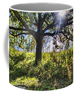 Coffee Mug featuring the photograph The Learning Tree by Daniel Sheldon