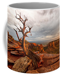 The Light On The Crooked Old Tree Coffee Mug