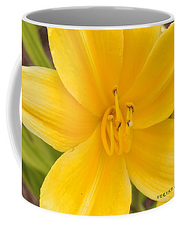 Coffee Mug featuring the photograph The Lily From Kentucky by Verana Stark