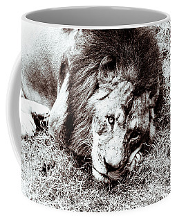 Coffee Mug featuring the photograph The Lion Sleeps Tonight by Wade Brooks