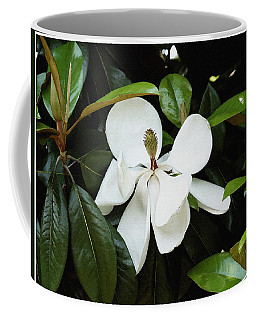 The Magnolia Bloom  Coffee Mug by James C Thomas
