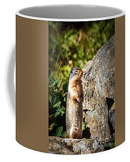 The Marmot Coffee Mug