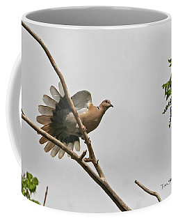 The New Dove In Town Coffee Mug by Tom Janca