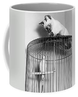 The Parakeet And The Cat Coffee Mug
